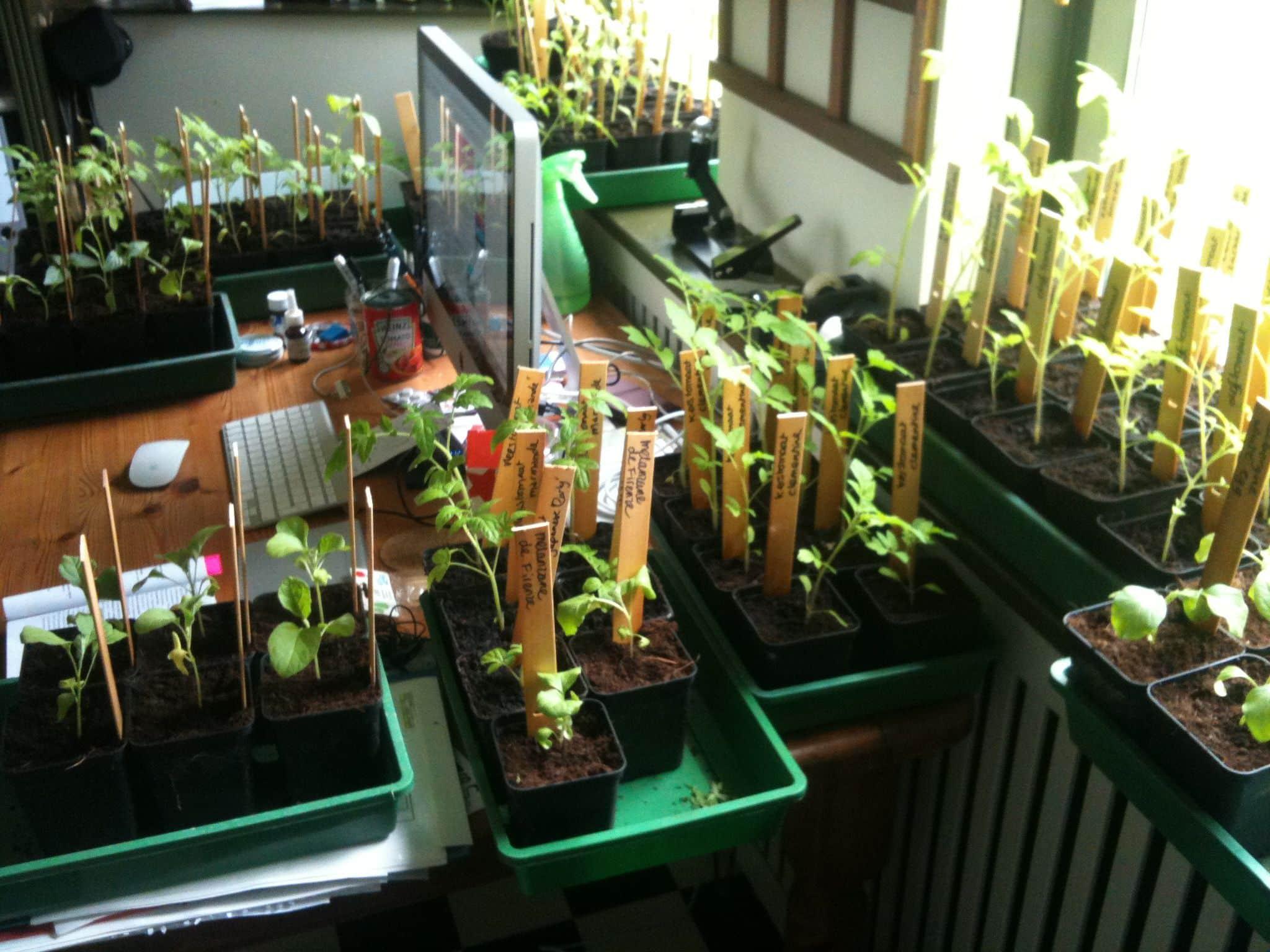 Een oerwoud van tomaten in BOE!media HQ