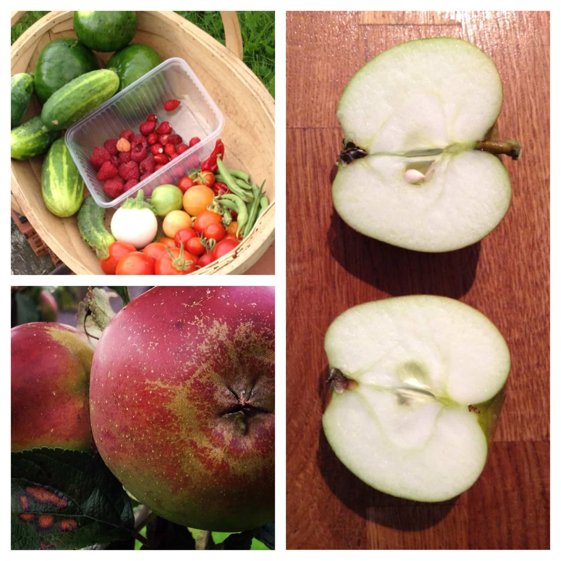 Moestuinoogst, cider en appels